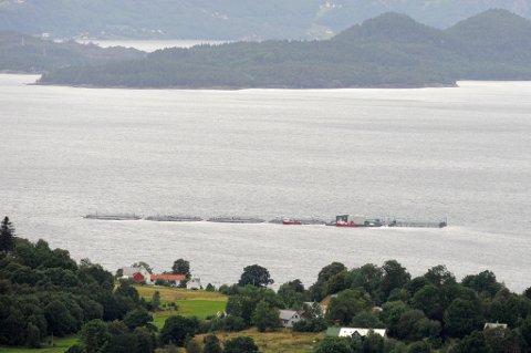 Lingalaks skal slakta all fisken ved anlegget på Nebbo utanfor Bogsnes, etter mistanke om sjukdom. (Foto: Jonn Karl Sætre).