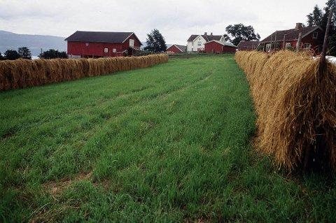 I 2018 vart det nydyrka 140 dekar i Kvinnherad kommune. Totalt jordbruksareal i drift var 40.418 dekar . Foto: Vidar Ruud, ANB/Illustrasjon
