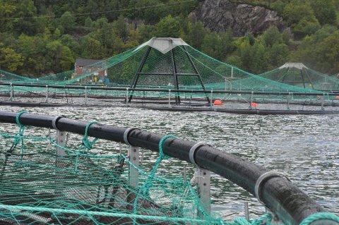 KONKURRERER: To oppdrettsbedrifter konkurrerer om å få  produsera på ein ledig lokalitet på Ulveneset i Ølve. Admnistrasjonen har levert positiv innstilling til begge sine søknadar.