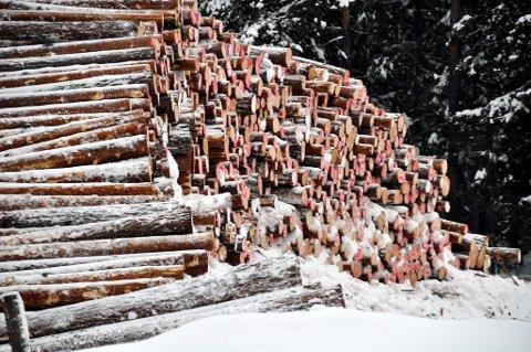 Skog Tømmer Tømmerlunne