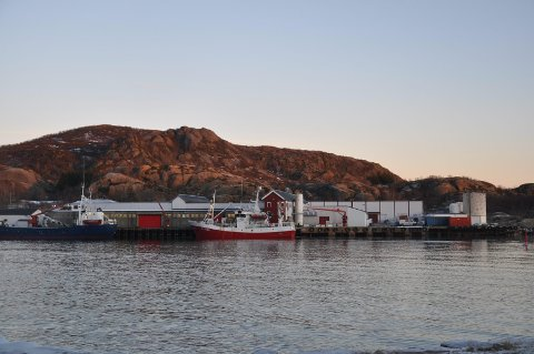 HOPEN: I høst vil Hopen Fisk AS kjøpte rundt 7500 tonn sild. Foto: Kai Nikolaisen
