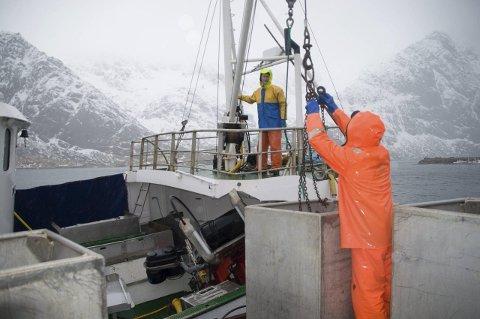 """Regnet og vinden pisker inn over havna på Tangstad når Inge Hansen står klar med kranen for å heise containerne om bord i """"Mefjord"""""""