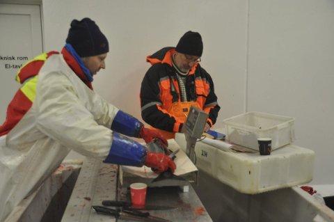 FORSKNING: Stian Kleven måler, veier og kjønnsbestemmer hver fisk før øresteinen tas ut. Kjell Gamst fører opplysningene på et konvolutt der øresteinene oppbevares.