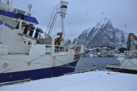 Aktiv på kvotemarkedet: Fiskere i Moskenes har vært blant de mest aktive i Nord-Norge på kvotemarkedet de siste 11 årene. Kjøp og salg av fiskekvoter gir store utslag langs kysten. Fem av seks Lofot-kommuner har hatt nedgang i andelen kvotefaktorer.foto: magnar johansen