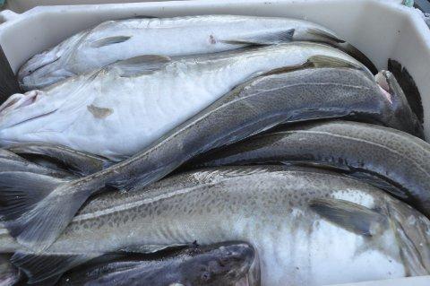 Råfisklaget innfører dynamisk minstepris for torsk