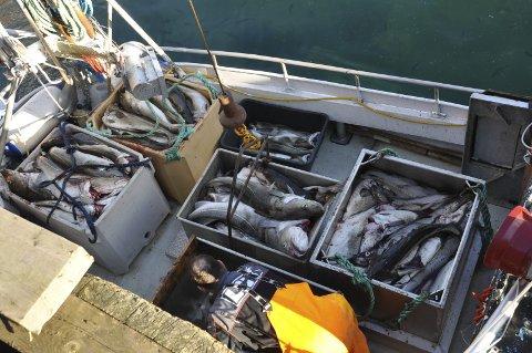 SKREI: Helmod hadde fylt båten med skrei.