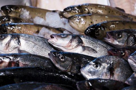 Innen 2050 vil det være mer plast enn fisk i havet, ifølge en ny rapport.