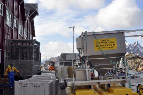 Godt år: Seafood Invest AS og datterselskapet Lofoten Sjøprodukter i Mortsund leverte et solid resultat i fjor. Hovedinntektskilden er salg av oppdrettslaks. Foto: Magnar Johansen