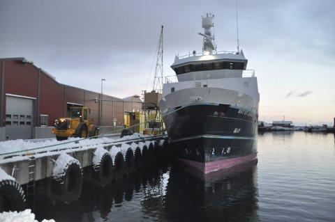 Godt år: Nordland Havfiske økte inntektene med 60 millioner kroner i 2016, og overskuddet 16 millioner kroner. – 2016 var et meget godt år for hele trålernæringen, sier styreleder Webjørn Barstad. Vi gjør oppmerksom på at denne tråleren, ved kai i Stamsund, tilhører Finnmark Havfiske.