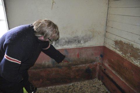 Fjøsen: -Her har spraymalingen foregått, sier Anders Nilsen