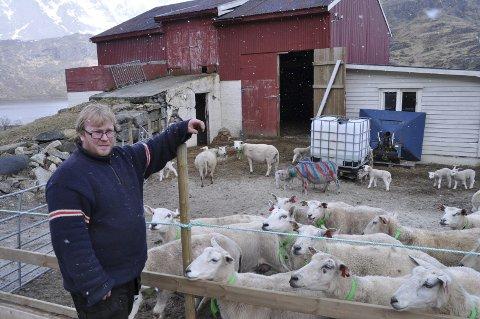 DYREMISHANDLING: Anders Nilsen er oppgitt over at noen har sprayet flere av sauene og lammene hans. Sauen som er helt nedsprayet er mere skeptisk til å komme til folk enn hun var før. Alle foto: Kai Nikolaisen
