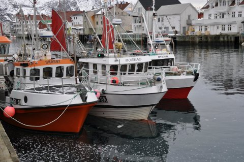 Fiskebåter, sjark, lofotfiske, henningsvær