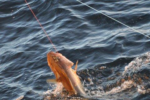 OVERSKUDD: Linefiske ble god butikk for Nordtind DA