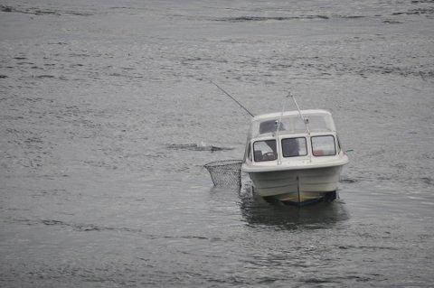 REGISTRERING: VVJFF håper at all laks og sjøørret som blir fisket i Offersøystraumen blir registrert.