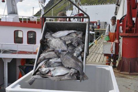 SEN START: 1. juni starter årets blåkveitefiske