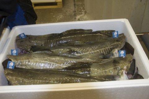 RAMMET: Eksporten av norsk torsk er hardt rammet av koronakrisen.
