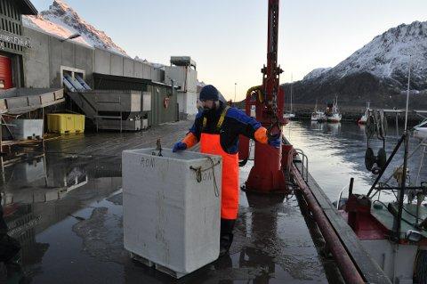 OVERSKUDD: Ramberg Fisk AS ga overskudd i fjor til morselskapet Harald Johansen Eiendom AS.  Arkivfoto