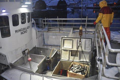"""SEISLUTT: Etter at de fikk for mye torsk i seigarna, må mannskapet på """"Ringskjær Nord"""" avslutte seisesongen."""