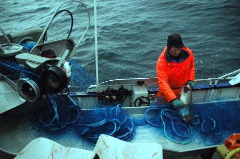 BEGRENSNINGER: Til neste år kan garnfiskerne i Lofoten få begrensninger