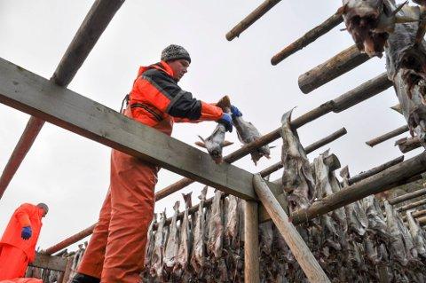 LOKAL ARBEIDSKRAFT: Freddy Sørensen i Ballstad Fisk AS klarte å få tak i nok lokal arbeidskraft at de klarer å holde drift ved anlegget .