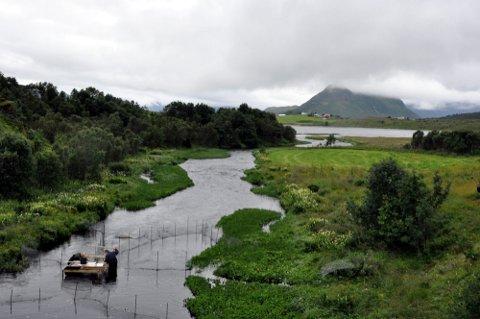 ÅPEN: Farstadvassdraget er et av to i Vestvågøy som er åpen for fiske. 16 av 24 vassdrag i Lofoten er stengt.