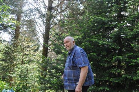 GRANSKOG: Statsforvalteren i Nordland mener Herbjørn Hansens planer om planting av lutzgran truer spesielle naturtyper i Valberg. Statsforvalteren sier ja til en søknad om planting i Bøstad-området. Foto: Magnar Johansen