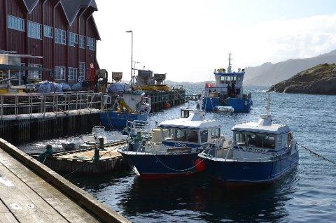 Lofoten sjøprodukter i Mortsund er én av to oppdrettsselskaper i Vestvågøy.