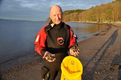 REFSNES: Terje Turøy dykker gjerne etter stillehavsøsters, men er ikke glad for at det finnes stadig fler av dem.