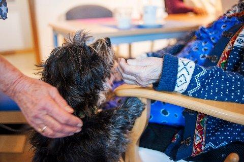 OMSORG: Kontakt med dyr kan være fint også for personer med demens.