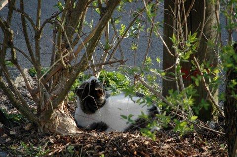 FORSMÅDD: Mens ekornet skalv i ledningen, lå katten bedagelig på nedsiden og ventet.