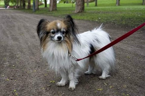 BÅNDTVANG: Både store og små hunder skal holdes i bånd i perioden 1. april til 20. august. Arkivfoto