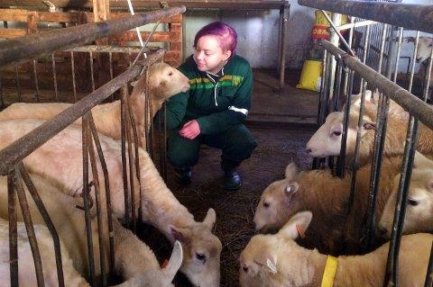 Kristin Olsen synes sauer er veldig ålreite dyr, og liker å være sammen med dem.