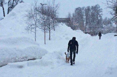 Slik så det ut i Tromsø torsdag ettermiddag. Foto: Susanne Noreng