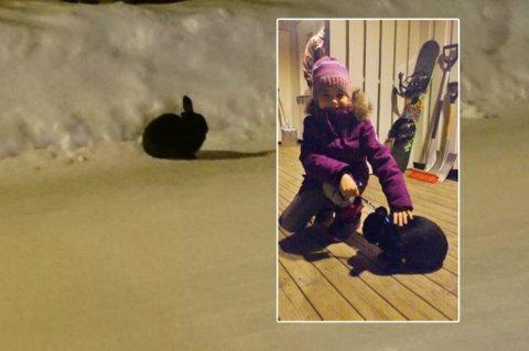FRIHOPPER: Kaninen Bensin er veldig tam, i følge Vilje Elise. I likhet med mange hunder, katter, sauer og rein i Burfjord, får han gå løs.Foto:privat