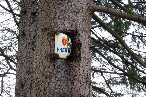 """FREDET: Grana var tydelig skiltet """"Fredet"""", men det ble ikke sett i det."""