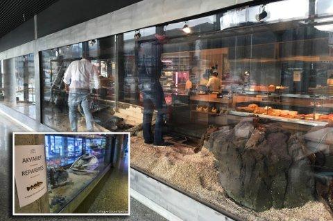 TØRRLAGT: Akvariet i Kystens Hus er fortsatt tørrlagt. Fugingen må utbedres før fiskene igjen kan flytte inn.