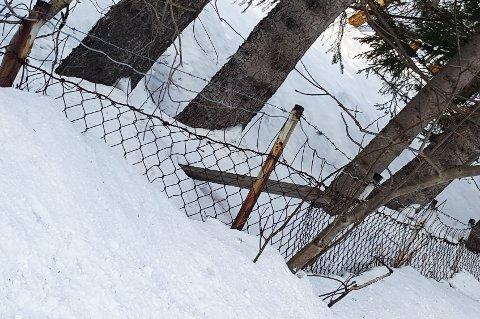 Piggtrådgjerdet går langs Fergeveien, sentralt på Silsand.