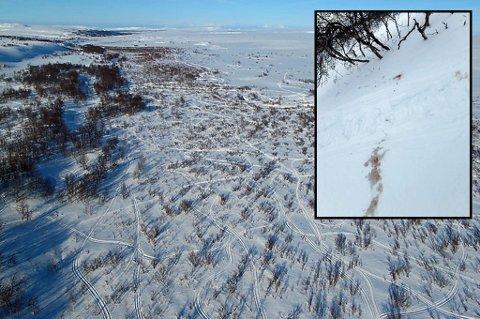 PÅ KRYSS OG TVERS: Slik så området ut for de i helikopteret. Innfelt er bilde av blodspor som ble funnet på bakken. Foto: SNO