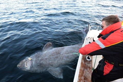 Thor Eivind i kamp med haien. Foto Julius Nielsen