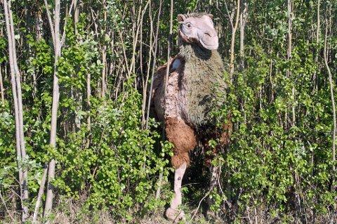 SKOGENS KONGE?: Tøy-kamelen er gjemt litt bak buskene, men er godt synlig for forbipasserende.