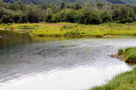 Oljehinne på vannet i Barduelva.