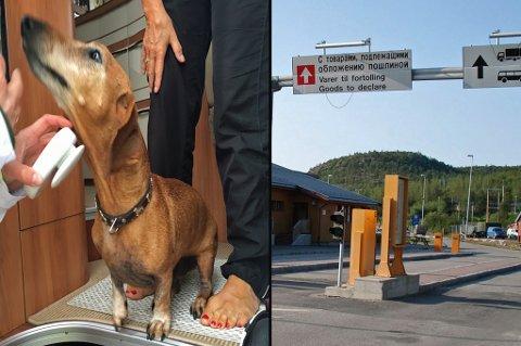 PÅ KONTROLL: I forrige uke var det kjæledyrskontroll ved seks grensestasjoner i Nord-Norge. Denne dach-hunden var blant dem som ble kontrollert og oppfylte alle krav om innførsel.  Foto. Mattilsynet/ANB