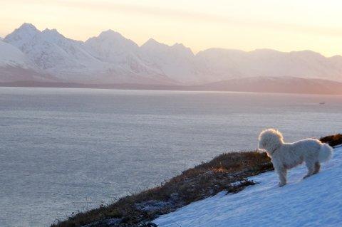 BLE ANGREPET: Ole Magnus Filseth tok med familiehunden til Veten på Karlsøy. Bare minutter etter at dette bildet ble tatt blir den lille hunden angrepet.