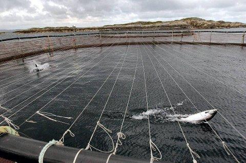 NYE ANLEGG: Fylkesrådet åpner for to nye oppdrettsanlegg i Troms. Illustrasjonfoto.
