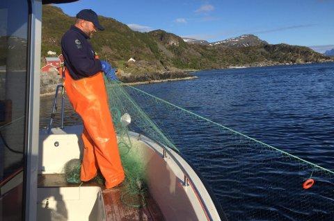 ULOVLIGE GARN: Statens Naturoppsyn (SNO) er godt i gang med sommerens kontroller av ulovlig garnfiske. Her fra da Espen Ottem i SNO trakk opp garn i Kvænangen tidligere i sommer.