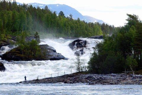 SVØMT OPP ELVA: Selene er blitt observert lekende like under Målselvfossen.