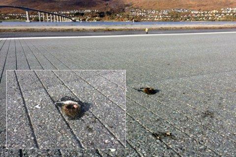 MIDT PÅ DAGEN: Disse bildene er tatt på Tromsø lufthavn fredag formiddag. På morrakvisten ser det betydelig verre ut med kråkeboller etter nattens festmåltid. Foto: Tromsø lufthavn