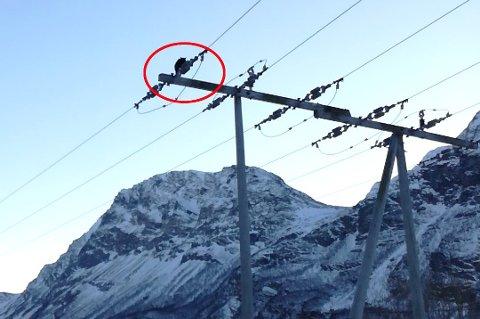 I PROBLEMER: Her har kattungen Sune stått siden natt til torsdag, mange meter over bakken. Foto: Privat