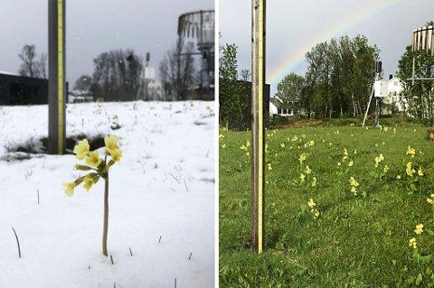 Bildet til venstre ble tatt 30. mai 2017. Det til høyre er tatt utenfor Meteorologisk institutt i Tromsø i dag.