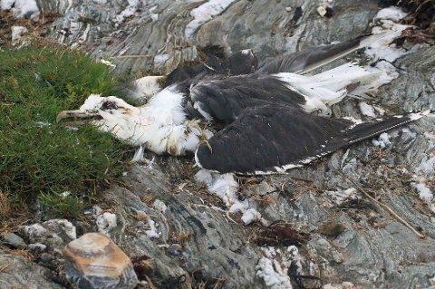 MYSTISK: Fugledøden i Balsfjord i sommer forblir et mysterium